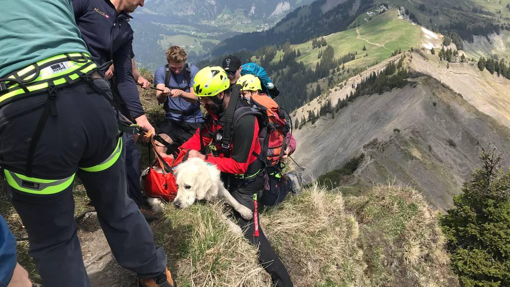 Hund aus Bergnot gerettet