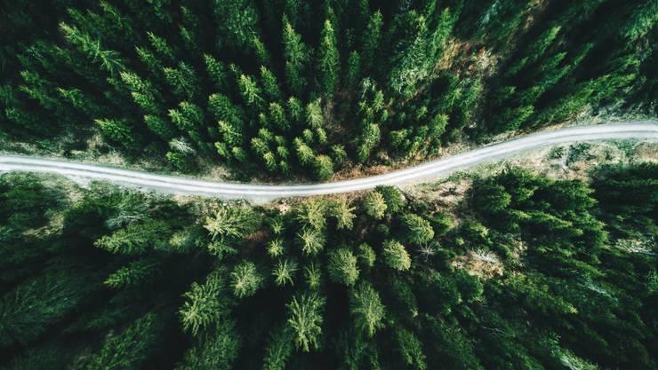 Darf die Schweiz den wachsenden Wald in die Klimabilanz einbeziehen? Das soll für alle Länder geregelt werden.