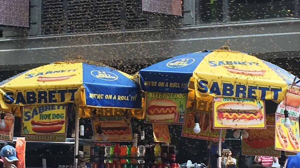 Tausende Bienen belagern einen Hotdog-Stand auf dem Times Square in New York. (Foto: Elisabeth  Yannone via AP)