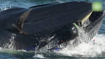 Bei einem Tauchgang in Südafrika gerät ein Deutscher ins Maul eines Wals und überlebt wie durch ein Wunder.