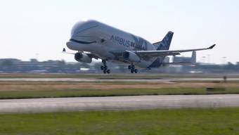 Airbus hat einen neuen Riesenflieger: Die Frachtmaschine Beluga XL. Am Donnerstag war Jungfernflug.