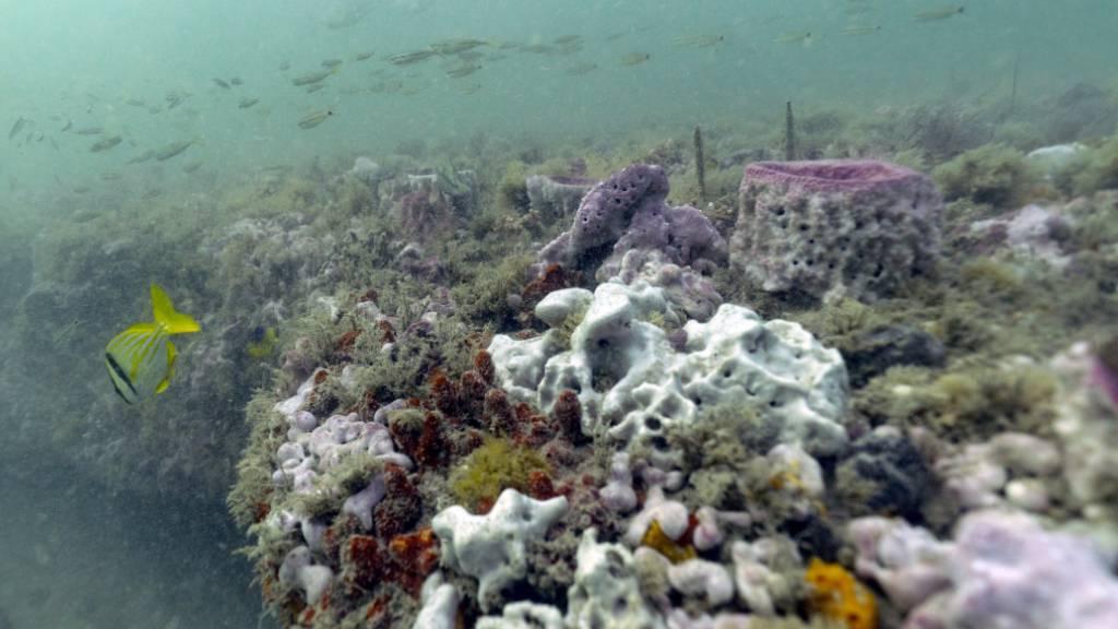 In den Tiefen der Meere befinden sich unentdeckte Schätze, die dereinst für die Pharmazie, Kosmetika oder Lebensmittelindustrie genutzt werden könnten. Die Erforschung dieser Meeresressourcen ist unter den Ländern aber ungleich verteilt.