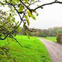 Der Rupphübelweg führt direkt in den Wald. Zum Zuhause von Schmutzli?