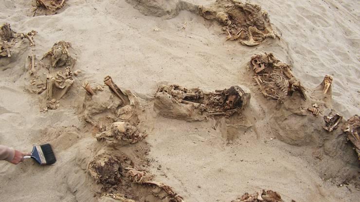Einige der ausgegrabenen sterblichen Überreste eines Kinderopfer-Rituals im Norden Perus.
