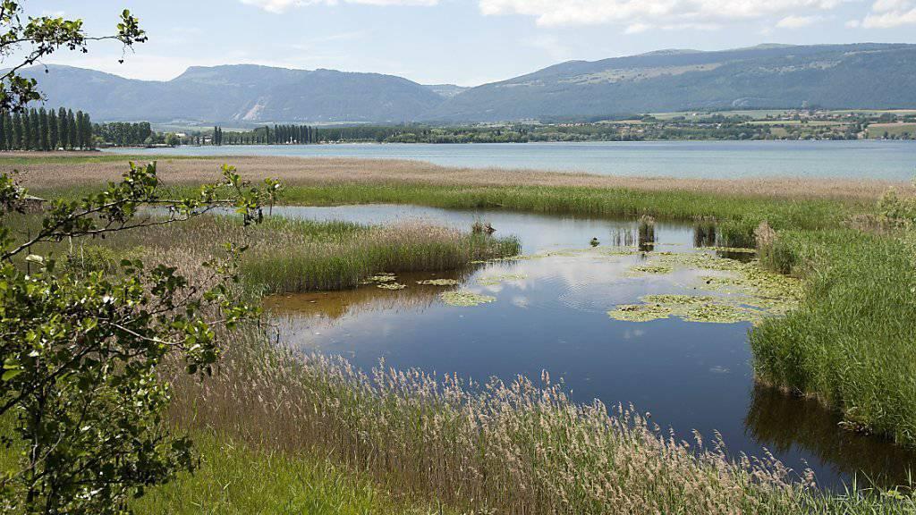 Blick auf einen unberührten Teil des Naturschutzgebiets Grande Cariçaie am Neuenburgersee. (Archivbild)