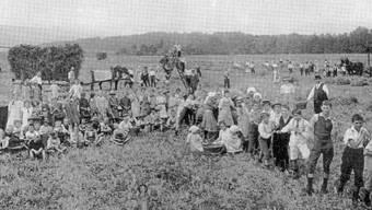 Ab 1917 begann der Schlieremer Gemeinderat, Pflanzplätze zu verpachten. Das Bild zeigt eine Ernte auf dem Bürgerland im Rohr.