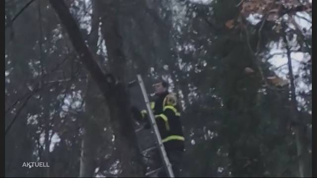 Feuerwehr rettet Katze von Baum