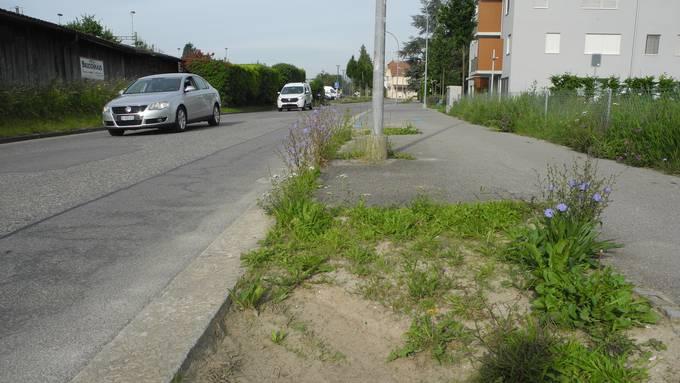 Trostloser Anblick- Die Platanen auf der Güterstrasse wurden vor Jahren gefällt. Jetzt sollen elf neue Bäume gepflanzt werden.