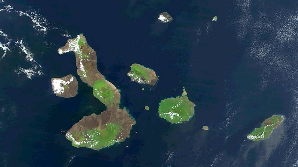 30 neue Tierarten vor Galápagos-Inseln entdeckt