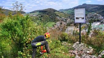 Natur-Hotspot auf dem Grat des Martinsbergs: Damit im felsigen Gelände seltene Pflanzen und Tiere gedeihen, rodet Forstwart Pius Moser das Gebiet rigoros.