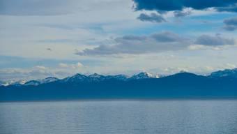 Die Blaufelchen im Bodensee könnten wegen der Erwärmung des Wassers Probleme bekommen.