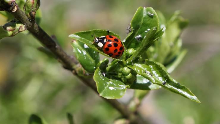 Breitenbach - Emsige Glücksbringer - es ist Frühling!