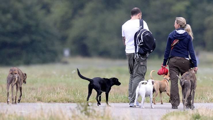 Hunde sind für viele Solothurner ein wichtiger Teil ihres Lebens. Bei den kantonalen Behörden waren zuletzt über 17 000 Hunde registriert.