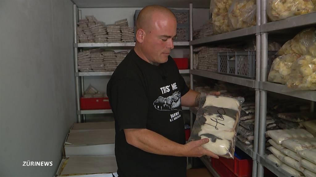 Reptilienfutter-Händler ärgert sich über Lieferverzögerungen der Post