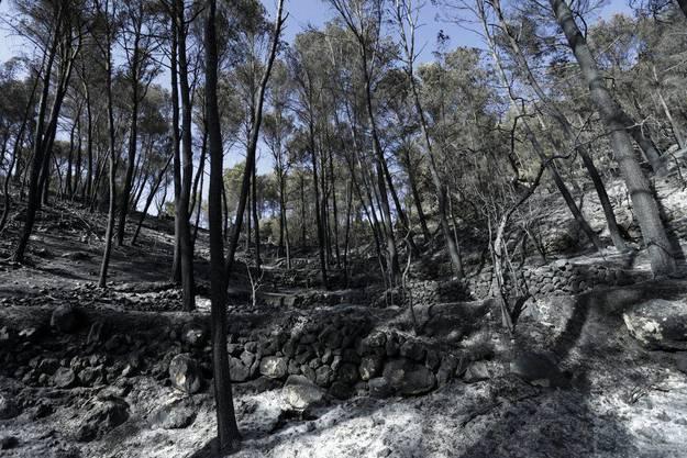 Verbrannte Wälder in Andratx