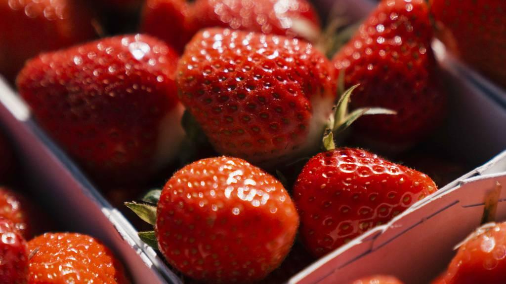 Heuer gibt es zwei Wochen früher Schweizer Erdbeeren