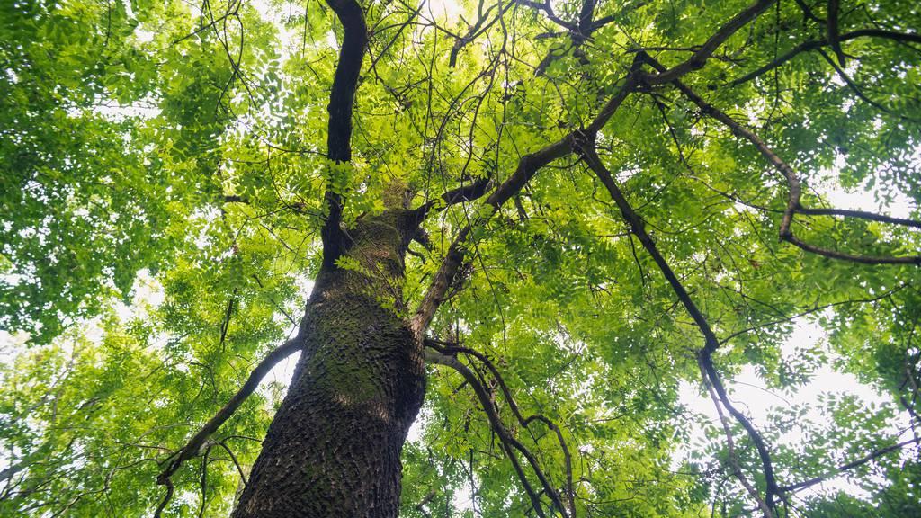 Für ein besseres Klima: Paris pflanzt 170'000 Bäume