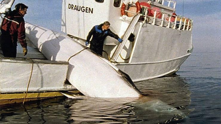 Ein Walfangschiff im Einsatz vor der Küste im Norden Norwegens. (Archivbild)
