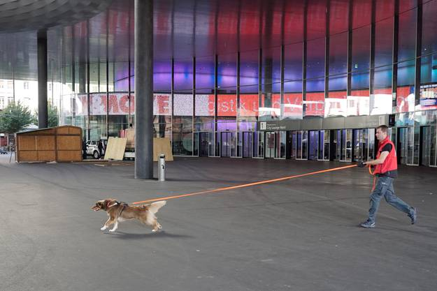 Die Hunde während des Trainings auf dem Messe-Areal.
