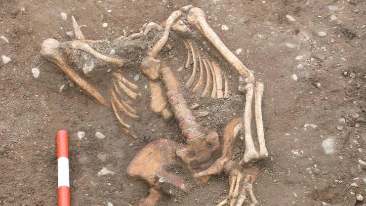 Das gut erhaltene Skelett 1 zeigt einen kräftigen Mann, der im mittleren Alter gerichtet wurde. Die Füsse fehlten. «Der Schädel muss als erstes in die Grube geworfen worden sein», schreibt die Kantonsarchäologie im Jahresbericht. «Er fand sich unter dem linken Knie.» Wie die Zähne zeigten, war der Mann Pfeifenraucher. (Archiv)