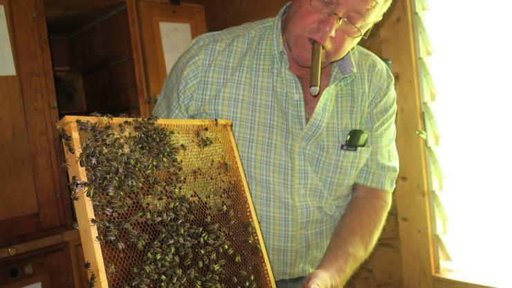 Imker Hermann Dubs sucht nach der Königin eines seiner Bienenstöcke.
