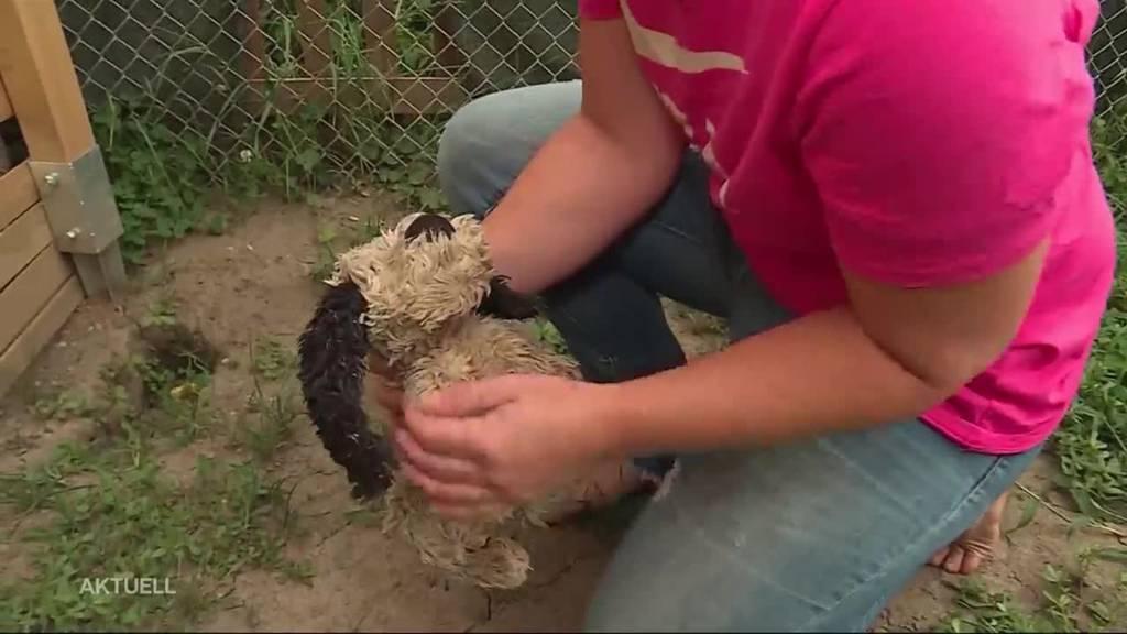 """17 Hunde beschlagnahmt: """"Mir wurde meine Familie weggenommen"""""""