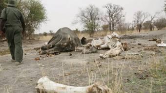 30'000 Elefanten pro Jahr wegen des Elfenbeins getötet (Archiv)