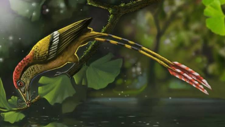 Der nur Kolibri-grosse Vogel mit bunten Federn lebte vor etwa 115 Millionen Jahren im heutigen Brasilien.