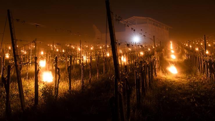 Mit Frostkerzen versuchten Winzer in der Bündner Herrschaft in der Nacht ihre Rebberge vor dem Frost zu schützen.