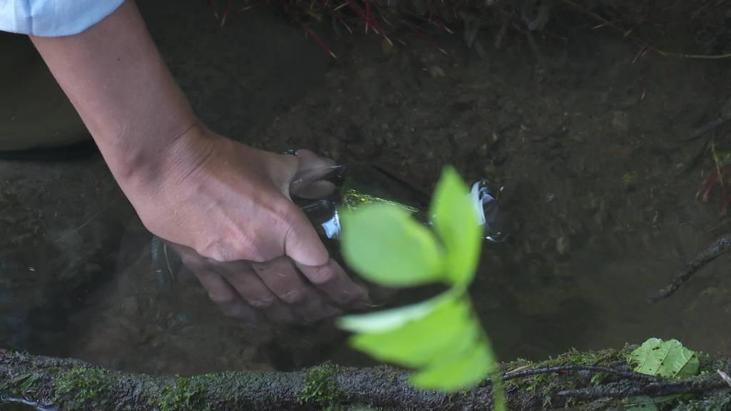 Pestizide im Wasser