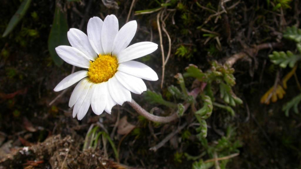 Einfluss der Böden ist im Alpenraum kaum erforscht