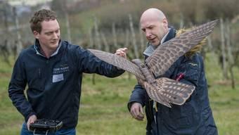Die zwei DrohnenpilotenWouter Smit und Jan Willem van den Eijkel bereiten ihren Robird auf den Abflug vor.
