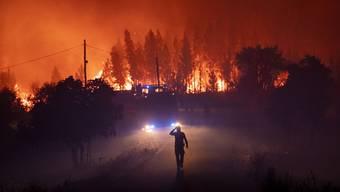 Bildergalerie: Der Amazonas brennt.