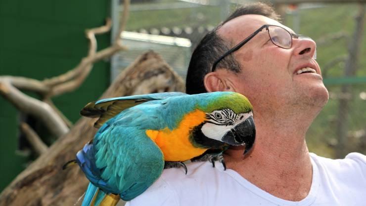 Seine Passion gilt den Vögeln: Rolf Lanz, Leiter des Vogelparks Ambigua, mit einem Gelbbrustara.