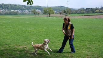Karin Truninger Pulfer meidet mit ihrem Labrador-Retriever-Rüden Zoga zurzeit das Aareufer zwischen Aarau und Schönenwerd