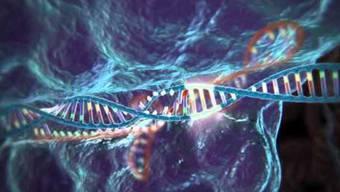 Mit dem Crispr-Verfahren ist es möglich, bereits im Genom der Pflanze vorhandene Resistenzen zu «wecken».