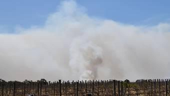 Apokalyptische Bilder: Die Buschbrände in Australien dauern weiter an - es ist kein Ende in Sicht.