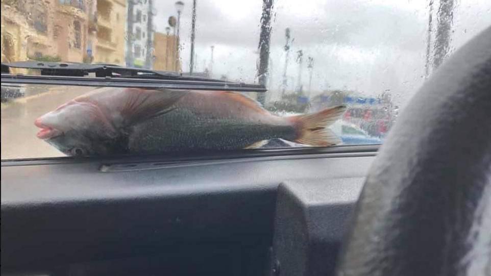 Bei den meisten Autofahrern landet höchstens mal ein Vogel auf der Windschutzscheibe – in Malta waren es am Wochenende Fische.
