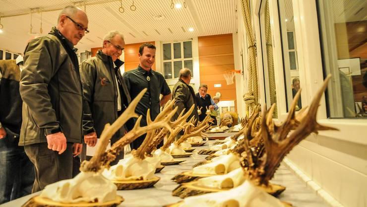Jagdkollegen begutachten und bewerten vor dem Beginn der Bezirksversammlung die Trophäen aus der vergangenen Jagd-Saison im Bezirk Bremgarten.