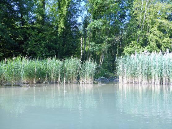 Einblick in ein Naturschutzgebiet