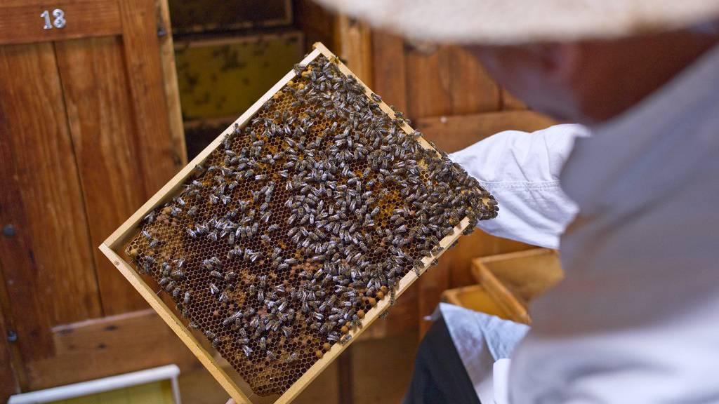 Wer ohne Bewilligung Bienen aus dem Ausland importiert, wird vom Bund geahndet. (Archiv)