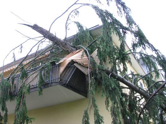 Baum fällt in Bad Zurzach auf Haus