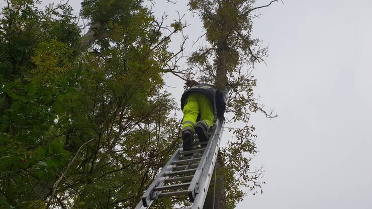 Andreas Stalder, Gruppenführer bei der Feuerwehr Gränichen, erreichte das Büsi mit Hilfe der Schiebeleiter