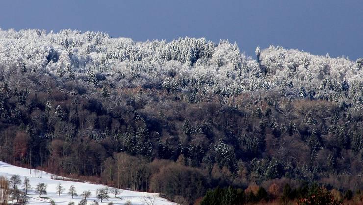 Märchenhaft schön: ein Wintermorgen am Heitersberg.