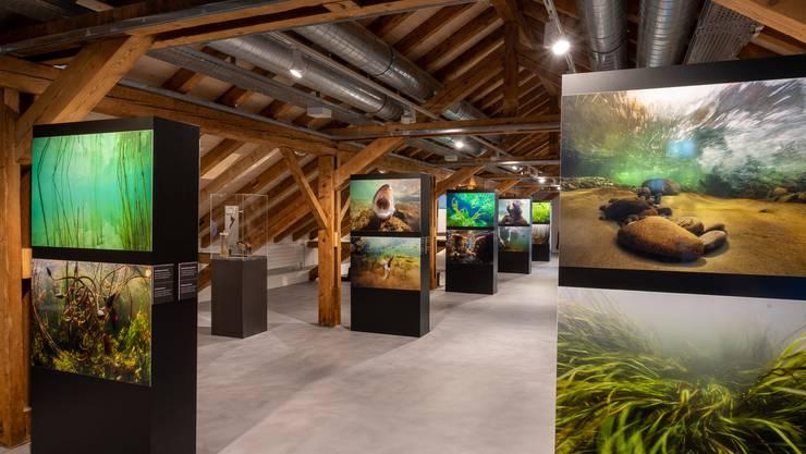 Blick in die neue Sonderausstellung «Süsswasser – Quelle des Lebens» im Haus der Museen Olten.