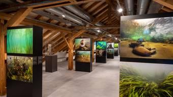 Sonderausstellung «Süsswasser – Quelle des Lebens» im Haus der Museen Olten