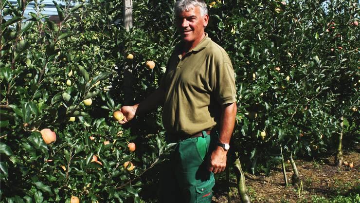 Die Galaäpfel von Bauer Kurt Bräm sind erst in ein paar Wochen reif genug, um gegessen zu werden. gep