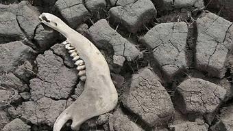 Dürre in Argentinien