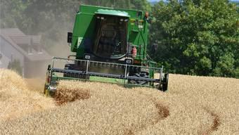 Magere Getreideernte: Manche Bauern konnten nur gerade die Erntekosten decken. Archiv/OT