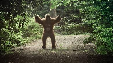 Grosse, affenähnliche Wesen werden vor allem in den stark bewaldeten Gebieten im Nordwesten Amerikas immerwieder gesehen.geTTY images